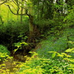 Photograph of the Moss Valley by Steve Withington