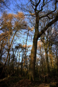 Photo of Ecclesall Woods, Sheffield, by Steve Withington