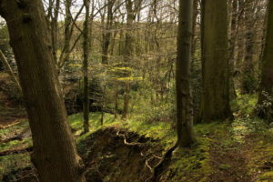 Photo of the Moss Valley by Steve Withington