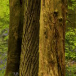 Photograph of Ecclesall Woods by Steve Withingto