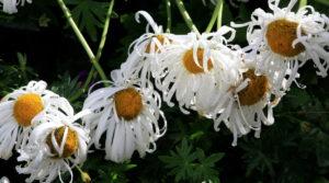 20170801flowers01