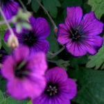 20171017flowers02
