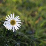 20171105flower