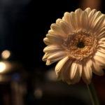 20171118norfolkarmsflower