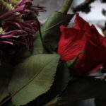 20180127flowers01