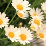 20180522croatiaflower