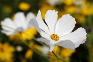 Photograph of a flower by Steve Withington