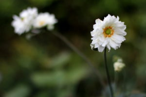 Photograph of flowers by Steve Withington
