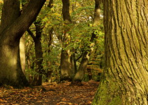 Photograph of Ecclesall Woods by Steve Withington