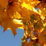 Photograph of autumn leaves by Steve Withington
