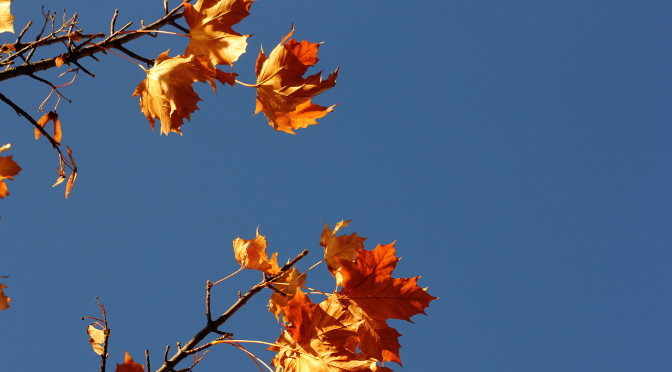 Photograph of leaves and sky by Steve Withington