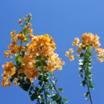 Photograph by Steve Withington - Gran Canaria - Flowers