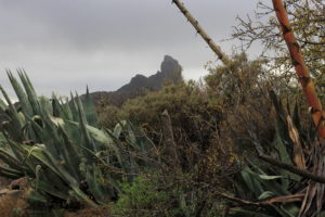 Photograph by Steve Withington - Gran Canaria