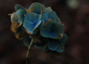 Photo of flower by Steve Withington