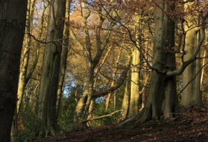 Photo of Limb Valley by Steve Withington