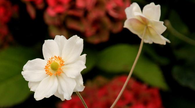 flowerfi