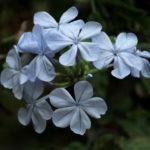 flowers03