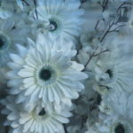 flowersinawindow
