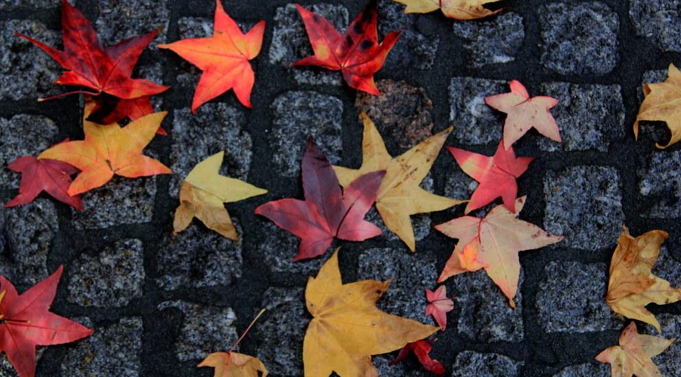 leaves-fi