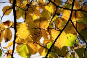 leaves03