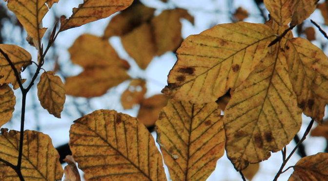 leavesfi